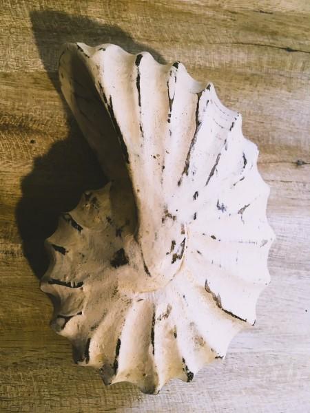 Nautilus, Palmholz, Weiß; B ca. 18 cm